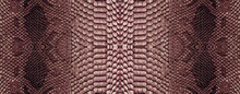 Snake Skin Texture Closeup Background. Panoramic Web Banner With Copy Space Background
