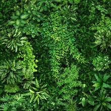 Vegetative Background From Leaves And Plants. Lush, Natural Foliage. Green Vegetation Backdrop. Top View Of A Bed Of Green Plants. High Quality Image For Professionnal Compositing.
