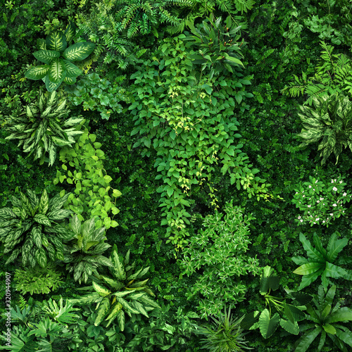 Fototapeta Vegetative background from leaves and plants. Lush, natural foliage. Green vegetation backdrop. Top view of a bed of green plants. High quality image for professionnal compositing. obraz