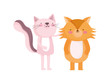 little fox and pink cat cartoon character on white background