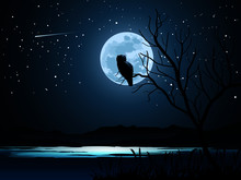 Owl On The Moon