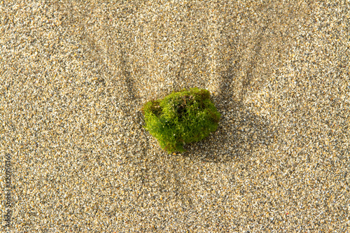 Photo small ball of ocean seaweed washed up on sandy beach