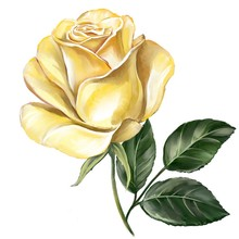 Flower Rose Yellow With Green ...