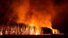Farmer Burning Sugarcane Field At Night