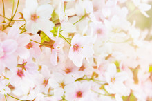 Spring Abstract Diffuse Backgr...