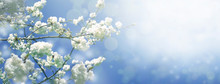 Spring Diffuse Background With...