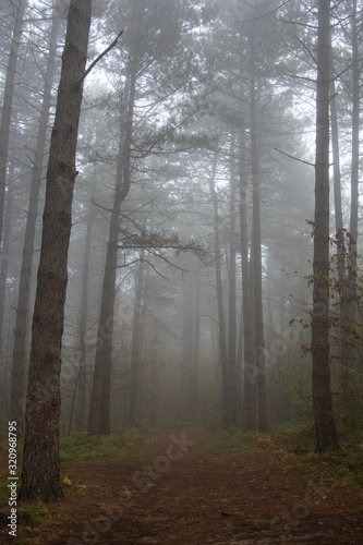 Morning in the old forest.