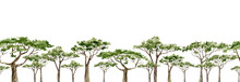 Watercolor Africa Trees Horazo...