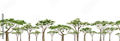 Foto Watercolor Africa trees horazontal banner