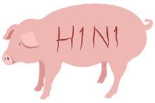 Piggy Cartoon Vector On Whtie Background With H1N1 Text Swine Flu Concept