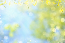 Spring Nature Background With Yellow Flowers On Branches And Blue Sky. Blur Background And Copy Space