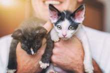 Two Young Kittens On Hands Of ...