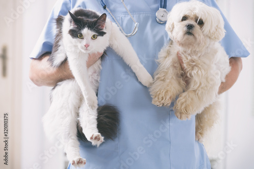 obraz PCV Vet with dog and cat