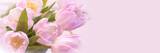 Fototapeta Tulipany - Bunch of pastel pink tulips close up, panoramic web banner with copy space