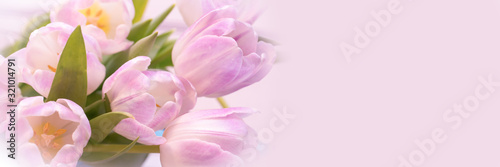 Fototapeta Bunch of pastel pink tulips close up, panoramic web banner with copy space obraz