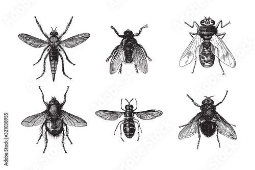 Fly collection / vintage illustration from Brockhaus Konversations-Lexikon 1908