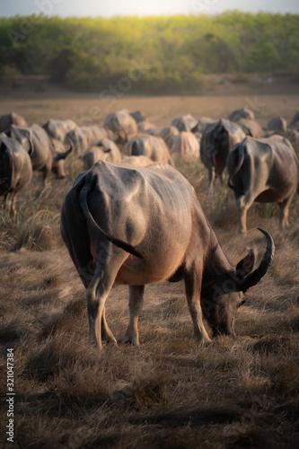 herd of wildebeest in africa Wall mural