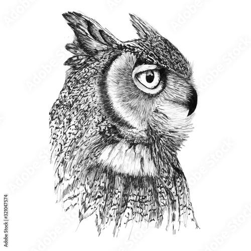 Portrait of a noble owl in profile Fototapete