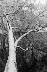 Fototapeta Drzewa Winter landscape at river with trees aside.