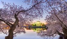 Washington, DC At The Tidal Ba...