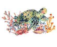 Watercolor Vintage Sea Life Natural Greeting Card