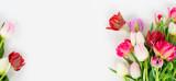 Fototapeta Tulipany - Fresh tulips flowers