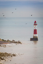 Birds Flying Around Beachy Hea...