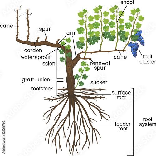 Foto Parts of plant