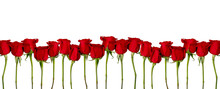 Amazing Red Roses Flowers. Iso...