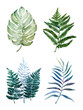 canvas print picture - Beautiful watercolor tropical leaves painted on white paper