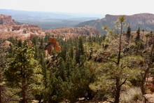 Pine Tree Valley In Bryce Canyon