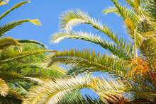 Palm Branches On A Background Of Blue Sky