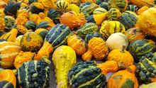 Variety Of Colorful Autumn Gourds On A Table