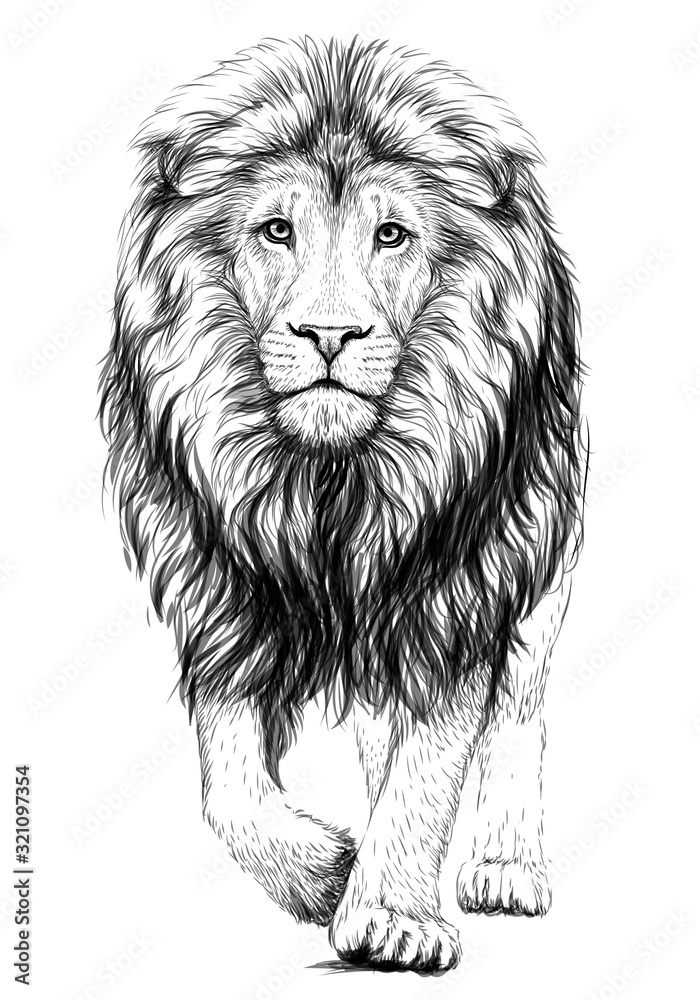 Fototapeta Lion. Sketchy, graphical, black and white  portrait of a lion walking forward on a white background.
