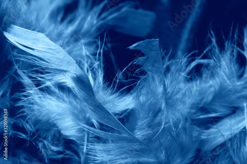 Wallpaper Mural Boa feathers close up