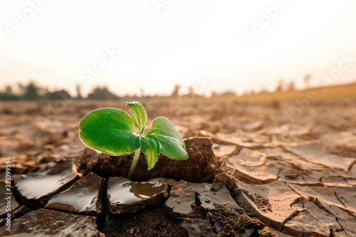 Fototapeta New life, Rising sprout on dry ground with Water shortage. Earth Day or environment protection. obraz