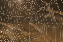 Drops Of Dew On A Spider Web I...