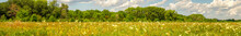 Panorama Summer Meadow With Fl...