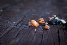 Shell Snail On The Table