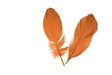 Close Up View Of Orange Feathe...