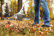 Person raking dry leaves outdoors on autumn day, closeup