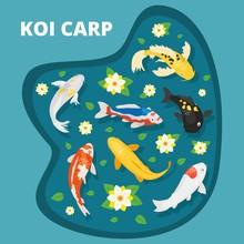 Koi Carps Vector Illustration ...