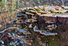 Baumstamm Bewachsen Von Pilzen