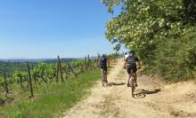 Escursione In Bicicletta In Campagna Toscana