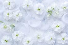 柔らかな白い花と羽 背景画像