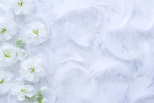 柔らかな白い花と羽 ...
