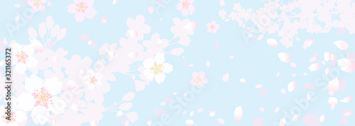 Fototapeta ふわふわ幻想的な桜と春の空 obraz