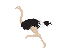 Detailed Ostrich With Running ...