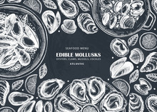 Hand Drawn Edible Marine Mollu...