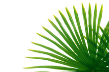 Green Leaf Of A Tropical Palm ...